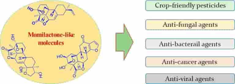 Hóa học đằng sau hợp chất quý có trong gạo