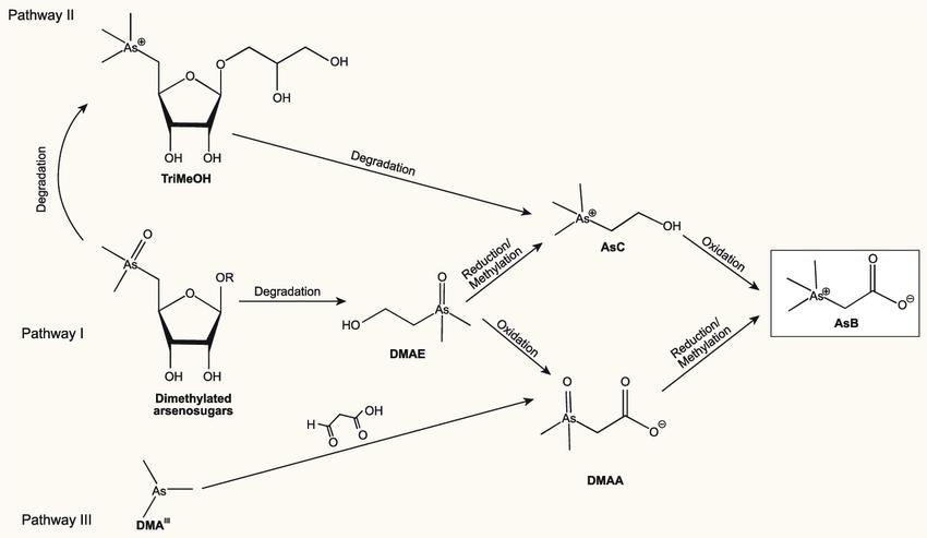 Hóa học của asen trong nước mắm