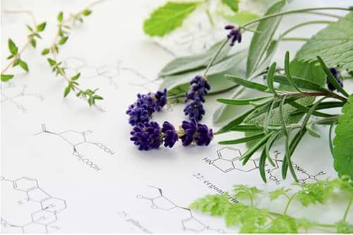 hoa hoc dang sau hoa lavender