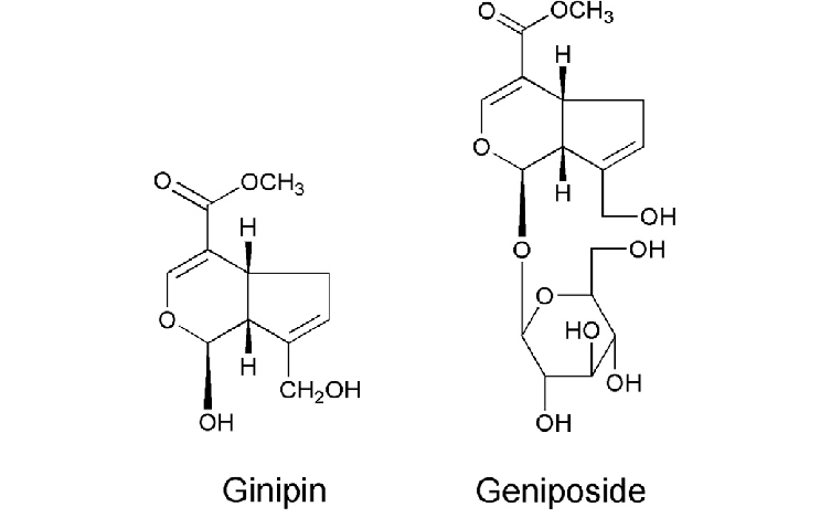 The chemical structures of Genipin and Geniposide min