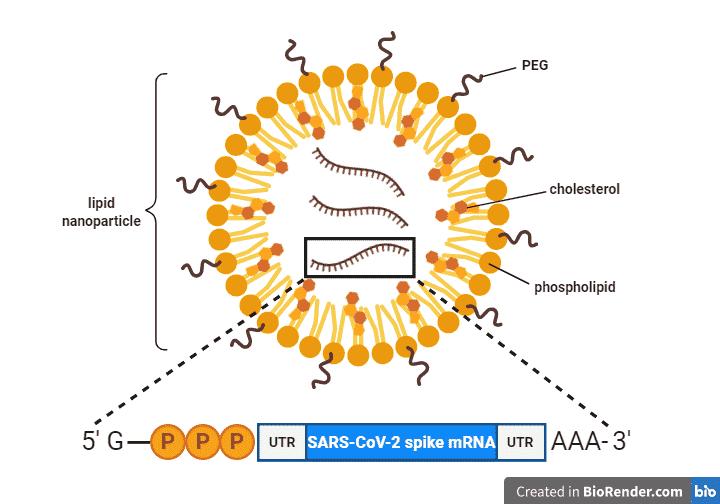 mRNA min 1